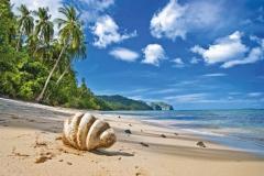 """Фотошпалери """"Ракушка на пляжі"""" (#110017)"""