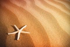 """Фотошпалери """"Морська зірка на піску"""" (#110019)"""