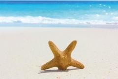 """Фотошпалери """"Морська зірка на березі моря"""" (#110024)"""