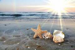 """Фотошпалери """"Морська зірка на березі моря"""" (#110025)"""