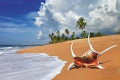 """Фотошпалери """"Ракушка на березі моря"""" (#110028)"""