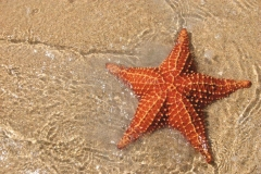 """Фотошпалери """"Морська зірка"""" (#110031)"""