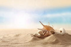 "Фотошпалери ""Ракушки на піску"" (#110032)"