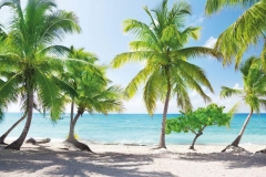 "Фотошпалери ""Пляж з пальмами"" (#110054)"