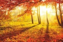 """Фотошпалери """"Осінній ліс"""" (#120007)"""