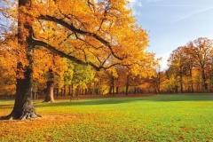 """Фотошпалери """"Осінній парк"""" (#120008)"""