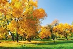 """Фотошпалери """"Осінні дерева"""" (#120009)"""