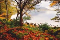 """Фотошпалери """"Озеро в лісі"""" (#120018)"""