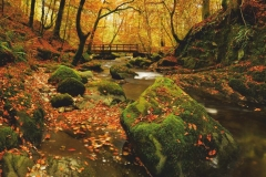 """Фотошпалери """"Річка в лісі"""" (#120020)"""