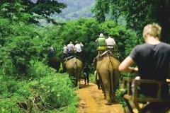 """Фотошпалери """"Туристи на слонах"""" (#120065)"""