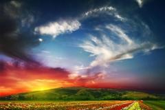"""Фотошпалери """"Квіткове поле"""" (#120078)"""