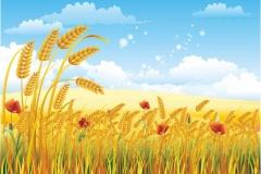 """Фотошпалери """"Пшеничне поле"""" (#150002)"""