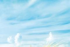 """Фотошпалери """"Пшеничне поле"""" (#150007)"""
