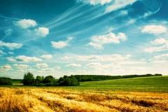 """Фотошпалери """"Пшеничне поле"""" (#150013)"""