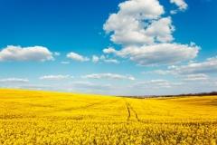 """Фотошпалери """"Україна"""" (#150016)"""