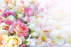 "Фотошпалери ""Троянди"" (#160005)"