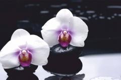 """Фотошпалери """"Орхідеї"""" (#160006)"""