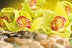 "Фотошпалери ""Жовті орхідеї"" (#160007)"