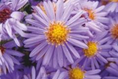 """Фотошпалери """"Квіти"""" (#160013)"""