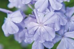 """Фотошпалери """"Квіти"""" (#160019)"""