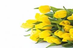 """Фотошпалери """"Жовті тюльпани"""" (#160020)"""