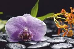"""Фотошпалери """"Орхідея"""" (#160026)"""