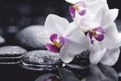 """Фотошпалери """"Орхідея"""" (#160027)"""