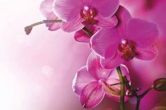 """Фотошпалери """"Орхідеї"""" (#160061)"""