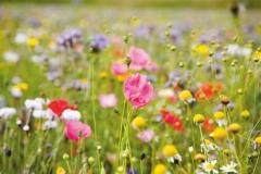 """Фотошпалери """"Польові квіти"""" (#160062)"""