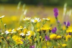 """Фотошпалери """"Польові квіти"""" (#160063)"""