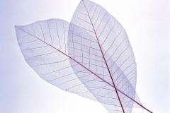 "Фотошпалери ""Transparent Leaf"" (#160078)"