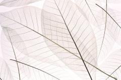 "Фотошпалери ""Transparent Leaf"" (#160079)"
