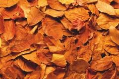 """Фотошпалери """"Осіннє листя"""" (#160080)"""