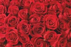 """Фотошпалери """"Червоні троянди"""" (#160084)"""