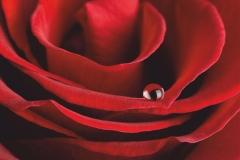 """Фотошпалери """"Червона троянда"""" (#160091)"""