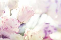"""Фотошпалери """"Ніжні квіти"""" (#160092)"""