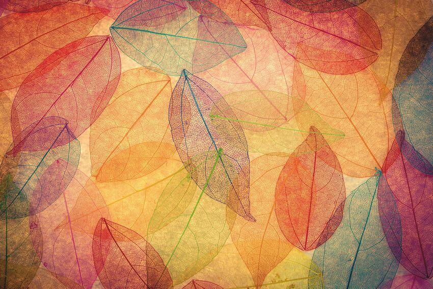 Абстрактне листя, Фотошпалери з кольоровим листям дерев, Листья, фотообои с листьями, латексний друк, Latexdruk, екологічний друк, екологічно чистий друк, широкоформатний друк, Україна, Чернівці, латекс-друк, купити, замовити, фотошпалери, фотообої, шпалери, обої, оформлення приміщень, дизайн приміщень, оформлення інтер'єру, друк на фотошпалерах, друк на шпалерах, дизайнерські шпалери, друк на холсті, картина у кімнату, модульні картини, картини з частин, картини на підрамнику, латексная печать, экологическая печать, экологически чистая печать, широкоформатная печать, Украина, Черновцы, латекс-печать, купить, заказать, фотообои, обои, оформление помещений, дизайн помещений, оформление интерьера, печать на фотообоях, печать на обоях, дизайнерские обои, печать на ткани, картина на ткани, печать на холсте, картина в комнату, модульные картины, картины из частей, картины на подрамнике