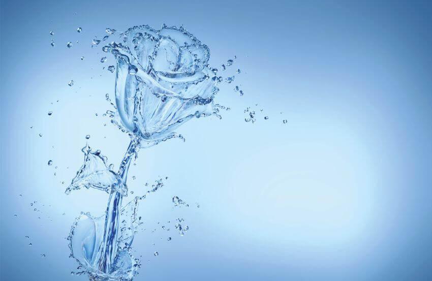 Троянда, Фотошпалери з трояндою з води, латексний друк, Роза, фотообои с абстрактной розой, Latexdruk, екологічний друк, екологічно чистий друк, широкоформатний друк, Україна, Чернівці, латекс-друк, купити, замовити, фотошпалери, фотообої, шпалери, обої, оформлення приміщень, дизайн приміщень, оформлення інтер'єру, друк на фотошпалерах, друк на шпалерах, дизайнерські шпалери, друк на холсті, картина у кімнату, модульні картини, картини з частин, картини на підрамнику, латексная печать, экологическая печать, экологически чистая печать, широкоформатная печать, Украина, Черновцы, латекс-печать, купить, заказать, фотообои, обои, оформление помещений, дизайн помещений, оформление интерьера, печать на фотообоях, печать на обоях, дизайнерские обои, печать на ткани, картина на ткани, печать на холсте, картина в комнату, модульные картины, картины из частей, картины на подрамнике