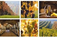 """Фотошпалери """"Колаж вино"""" (#600102)"""