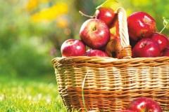 """Фотошпалери """"Зібрані яблука"""" (#600108)"""