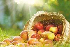 """Фотошпалери """"Яблука в траві"""" (#600109)"""