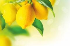 """Фотошпалери """"Лимони"""" (#60045)"""