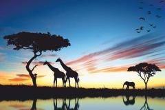 """Фотошпалери """"Африка"""" (#70008)"""