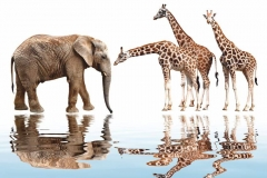 """Фотошпалери """"Слон і жирафи"""" (#70009)"""