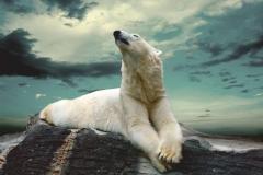 """Фотошпалери """"Білий ведмідь"""" (#70011)"""