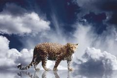 """Фотошпалери """"Леопард"""" (#70013)"""