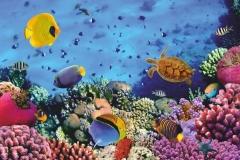 """Фотошпалери """"Підводний світ"""" (#70015)"""
