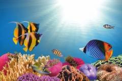 """Фотошпалери """"Підводний світ"""" (#70016)"""