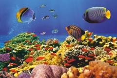 """Фотошпалери """"Підводний світ"""" (#70017)"""