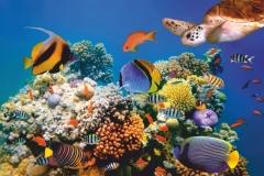 """Фотошпалери """"Підводний світ"""" (#70018)"""